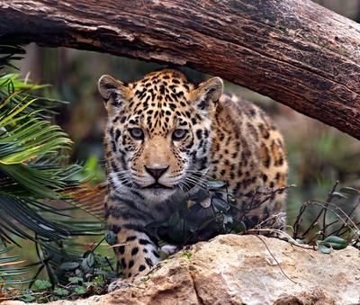Heredia, Jaguar - Immobili in vendita o in affitto